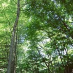 森林浴で心とカラダに癒しを|結婚恋愛OberonLodge