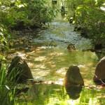 水の活用!水は健康、癒しにもつながる|結婚恋愛OberonLodge